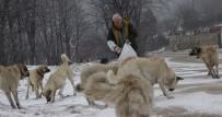 SOKAK HAYVANLARI - Köpekler Onu Aracının Sesinden Tanıyor