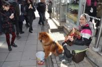 İSMET İNÖNÜ - Romanyalı Kız Kardeşlerin Müziklerinden Çok Köpekleri Beks İlgi Görüyor