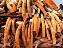 Uganda'da 1 ton fil dişi ele geçirildi