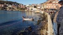 DEMIRLI - Yunustan Kaçan Balıklar Limana Sığınınca..