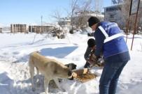 YÜCEL BARAKAZİ - Bingöl Belediyesi, Sokak Hayvanları İçin Doğaya Yem Bıraktı