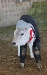 Hayvanları Çocukları Gibi Giydirdi