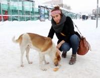 SOKAK KÖPEĞİ - Sokak Köpeğinin Zor Anlarına İnsan Merhameti Yetişti