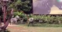 HAYVAN BAKICISI - Zebra Bakıcısına Böyle Saldırdı