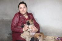 SOKAK KÖPEĞİ - 100 Köpek Ve 30 Kediye Bakan Gülşen Kurt, 30 Köpeğin Zehirlendiğini İddia Etti
