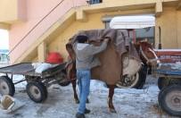 Atları Soğuktan Battaniyelere Sararak Koruyorlar