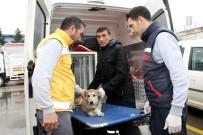 Ayakları Kırılan Hayvan İçin Özel Ambulans