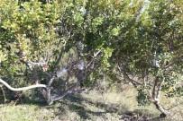ORMAN VE SU İŞLERİ BAKANI - İzmir'e 200 Bin Dekarlık Sakız Ormanı