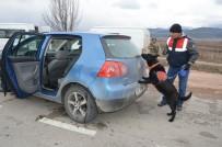 SELAMI KAPANKAYA - Jandarma Narkotik Köpekleriyle Uygulama Yaptı