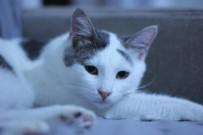 HAYVAN SEVERLER - Kedilerde Nezle Salgını