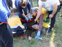 KAYALı - Motosiklet Kaldırıma Çarpıp Takla Attı Açıklaması 1 Yaralı