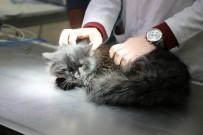 SOKAK KEDİSİ - Sokakta Bulunan Yaralı Kedi Ameliyat Edildi