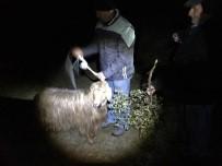 KEÇİ - 20 Gündür Kayalıklarda Mahsur Kalan Keçiyi AKUT Kurtardı