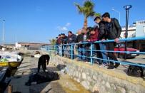 SAHİL GÜVENLİK - Çeşme'de Sahilde 2 Ceset Bulundu