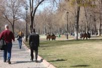 GÜNEŞLI - Gaziantep'te Bahar Havası