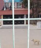 PİTBULL - Okulda Çocukları Korkutan Pitbull İçin Karar Verildi...