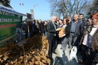 ORMAN VE SU İŞLERİ BAKANI - 350 Bin Adet Fidan Ücretsiz Dağıtıldı