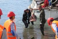 GÜVERCINLIK - Bodrum'da Deniz Dibi Temizliği Gümbet'te Devam Etti