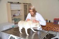 SOKAK HAYVANI - Bozüyük'te Sokak Hayvanları Koruma Altında