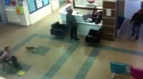 ACIL SERVIS - Hastaneyi Gezen Davetsiz Kedi Girdiği Kapıdan Dışarı Çıktı