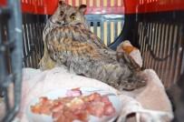 Soğuktan Yorgun Düşen Baykuş Korumaya Alındı