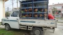 Veteriner Raporu Olmayan Kanatlı Hayvan Nakline Jandarma Geçit Vermedi