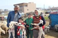 KURBAN BAYRAMı - 5 Tır Kurbanlık Koyunu Dolandırıcılara Kaptırdılar