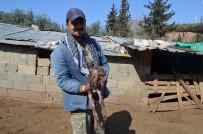 GENETIK - Keçi Kuzuya Benzer Bir Yavru Doğurdu