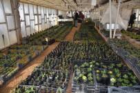 HERCAI - Kilis, Belediye Serası İle Yeşilleniyor