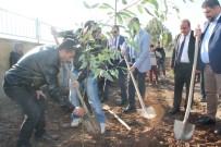 İŞADAMLARI - Silopi'de Köy Okulunda Ağaç Dikme Etkinliği