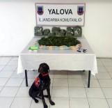 Yalova'da 'Skunk' Adlı Yeni Nesil Uyuşturucu Ele Geçirildi