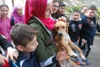 YAVRU KÖPEK - Okul Bahçesine Giren Yavru Köpek İlgi Odağı Oldu