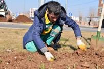 ESTETIK - Yeşil Alanlar Peyzaj Gülleriyle Donatılacak