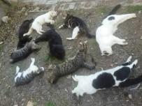 HAYVAN SEVERLER - Alanya'da Kedi Ölümleri