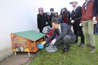 ÜNİVERSİTE KAMPÜSÜ - Kedi Ve Köpekler İçin GTÜ Kampüsüne Besleme Noktaları Kuruldu