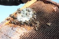 Arıların En Büyük Düşmanı 'Yalancı Bahar'