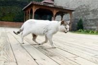 YAVRU KEDİ - Hasta Kedi Belediyeye Sığındı