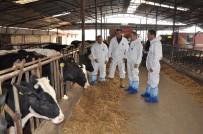 DÖNER SERMAYE - Hayvan Hastalıkları İle Mücadele Sezonu Başladı