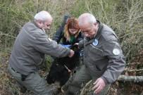 AHMET ÖZEN - 'Siyah Kurt' Diye Günlerce Besledi Köpek Çıktı