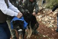AHMET ÖZEN - 'Siyah Kurt' Köpek Çıktı
