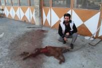 YABANİ HAYVANLAR - İlçeye inen kurtlar köpeği yedi!
