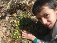 HAKKARİ ÇUKURCA - Cemre Düştü, Kır Çiçekleri Açtı