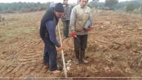 ZEYTİN YAĞI - Orman İşletme Müdürlüğü Köylüye Zeytin Fidanı Dikiyor