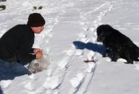 Bolu'da Köpekler Donmak Üzereyken Kurtarıldı