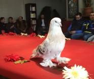 AÇIK ARTTIRMA - Lüks araç fiyatına güvercin