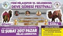 Milas'ta 10. Geleneksel Deve Güreşi Festivali Heyecanı