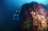 OKSİJEN KAYNAĞI - Ayvalık'ta Asırlık Mercanlara Koruma Planı