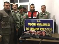 Karaca Avlayan Avcılara 13 Bin TL Ceza