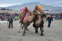 SAĞANAK YAĞMUR - Menemen'de Deve Güreşi Festivali