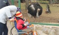 HAYVANAT BAHÇESİ - Savaş Mağduru Çocuklar İlk Kez Hayvanat Bahçesi Gördü
